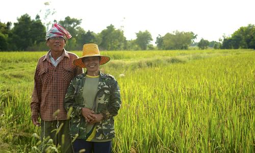 Bài học xây dựng thương hiệu gạo của Thái Lan