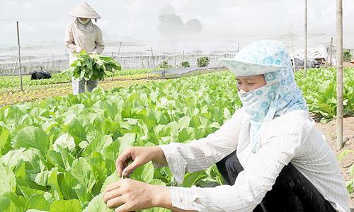 Cần xây dựng thương hiệu hàng nông sản chủ lực của Củ Chi