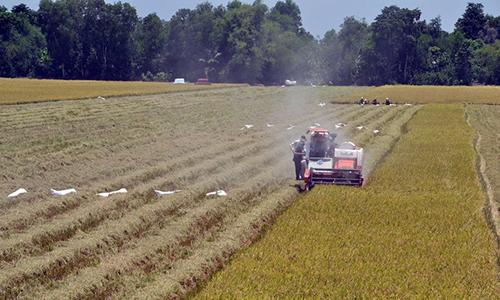Xây dựng giá trị thương hiệu hạt gạo Việt Nam (Kỳ 2)