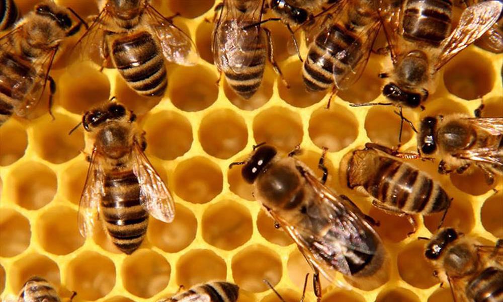 Gian nan xây dựng thương hiệu cho mật ong Việt